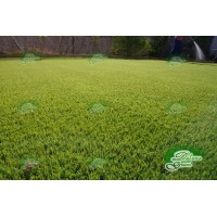CESPED ARTIFICIAL ROYAN EXTRA 37 DELUXE - DELUXEGRASS